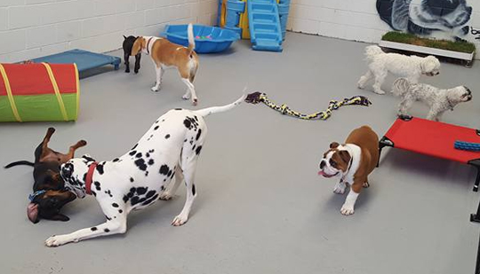 dog socialization and play